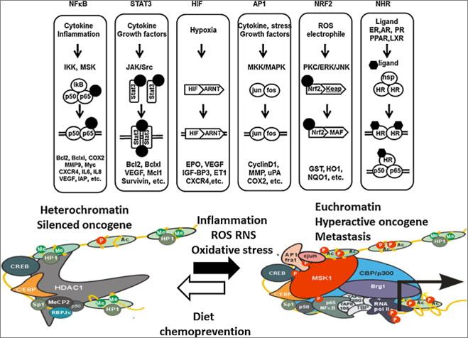 Epigenetics diet exercise