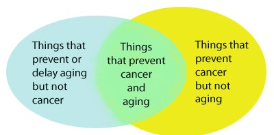 cancerandaging