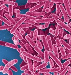 bacteria_edited-1