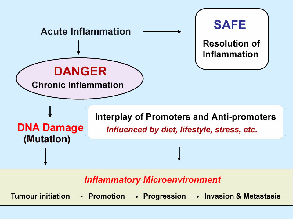 inflamm-3-3